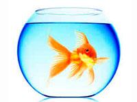 Раскраски Аквариум с рыбками
