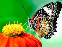Раскраски Цветы и бабочки