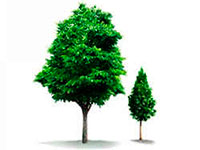 Раскраски Деревья и кустарники