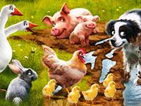 Раскраски Домашние животные