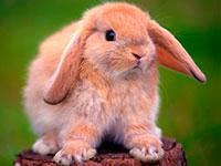Раскраски Кролик