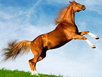 Раскраски Про лошадей