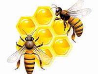 Раскраски Пчелы