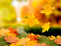 Раскраски На тему осень золотая
