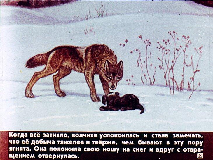 Картинка к произведению чехова белолобый
