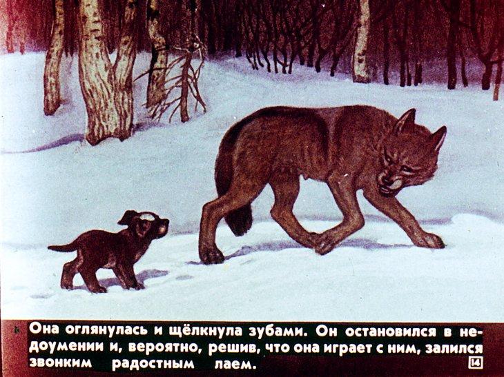 Чехов белолобый иллюстрации к рассказу