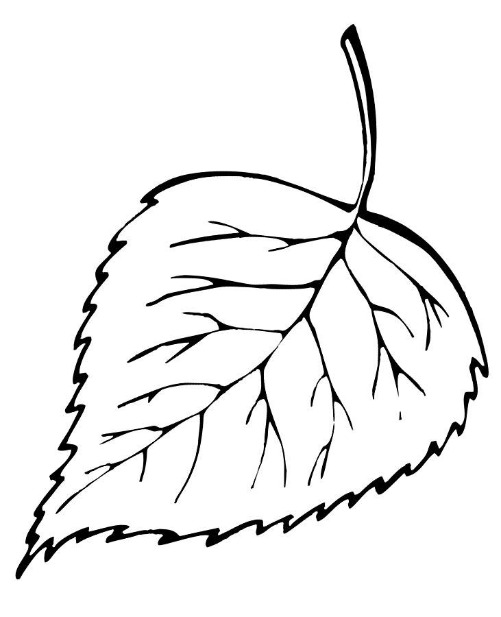 Картинка для раскрашивания лист березы