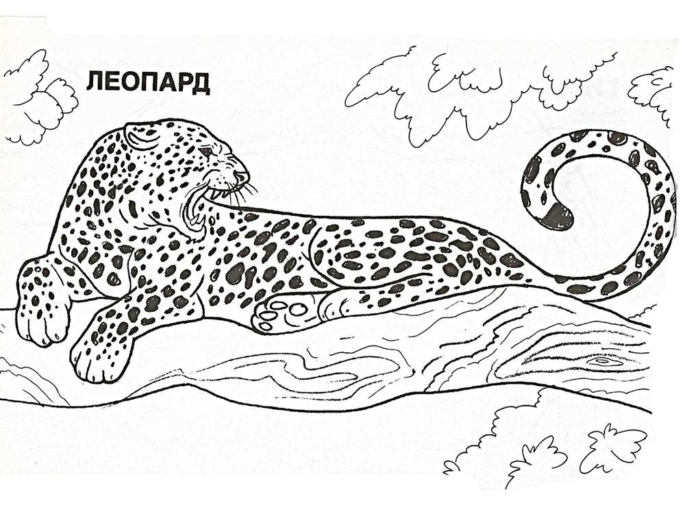 раскраски леопард скачать и распечатать