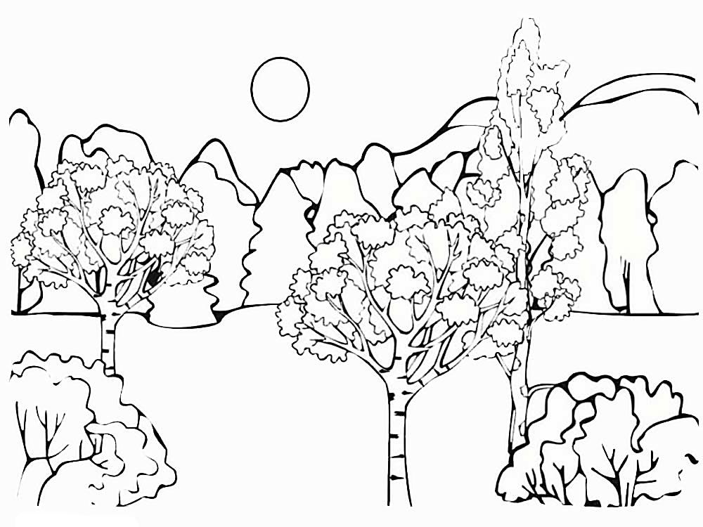 картинка леса распечатать заявил