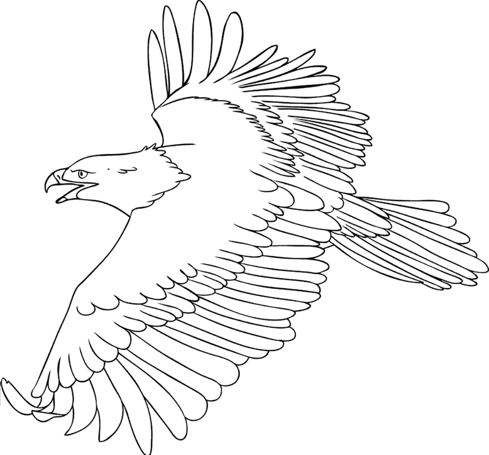 realistic bald eagle coloring page free printable