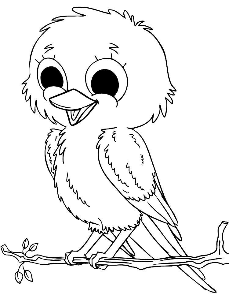раскраски попугай кеша скачать и распечатать