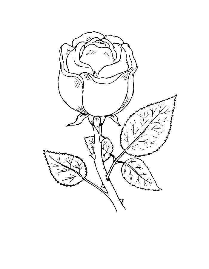 раскраски розы красивые зависимости