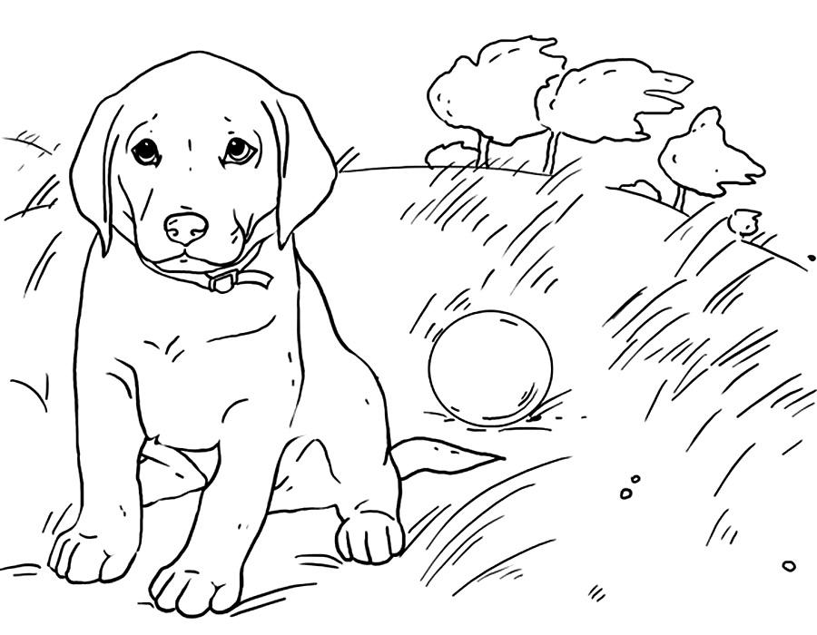 Раскраска собачка картинка