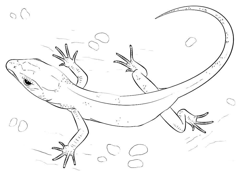 раскраски ящерица скачать и распечатать