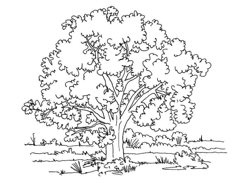 Раскраски Деревья и кустарники скачать и распечатать