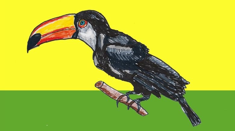 Как нарисовать птицу (фото): поэтапная инструкция для ребенка и начинающих